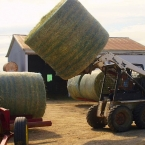 Tyler Unloading Bales